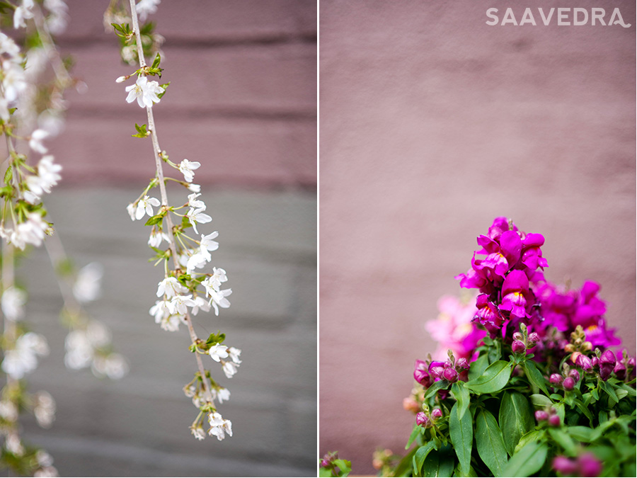 NYC photographer Saavedra Photography Blossoms Brooklyn 2 The secret to life